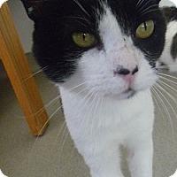 Adopt A Pet :: Mr. Meows - Hamburg, NY