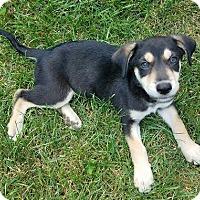 Adopt A Pet :: Ralphie - ADOPTION PENDING! - Potomac, MD
