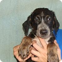 Adopt A Pet :: Turbo - Oviedo, FL