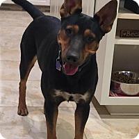 Adopt A Pet :: 'June' - Fresno, CA