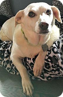 Labrador Retriever Mix Dog for adoption in St Louis, Missouri - Jenna