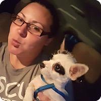 Adopt A Pet :: Earnie meet me 10/28 - Manchester, CT