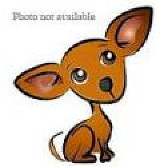Chihuahua Mix Dog for adoption in San Bernardino, California - URGENT on 12/3 SAN BERNARDINO