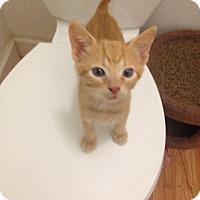Adopt A Pet :: Victor - Hallandale, FL