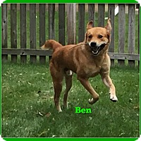 Adopt A Pet :: Ben - Elburn, IL