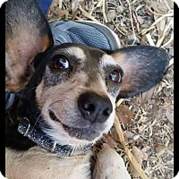 Adopt A Pet :: Ruthie - Rosemount, MN
