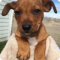 Adopt A Pet :: Kringle - Loxahatchee, FL