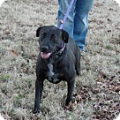 Adopt A Pet :: Sheba