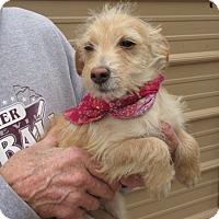 Adopt A Pet :: S1059-X    Gus - Bay Springs, MS