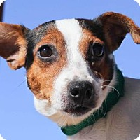 Adopt A Pet :: Yummy - Colorado Springs, CO
