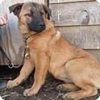 Adopt A Pet :: P Litter--arriving soon - Chichester, NH