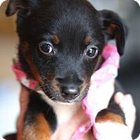 Adopt A Pet :: Sparkle - West Grove, PA