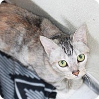 Adopt A Pet :: Snowy - Covington, LA