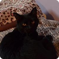 Adopt A Pet :: Sammy - Brownsboro, AL