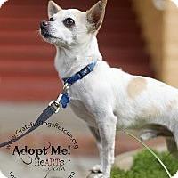 Adopt A Pet :: Etienne - San Francisco, CA
