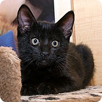 Adopt A Pet :: Panthro - Irvine, CA