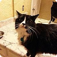 Adopt A Pet :: Troubador - Ennis, TX