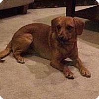 Adopt A Pet :: PARKER - Cleveland, OH