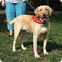 Adopt A Pet :: Lea - Spring, TX