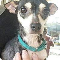 Adopt A Pet :: Muffin - Long Beach, CA