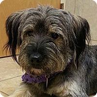 Adopt A Pet :: Roxanne - Brattleboro, VT