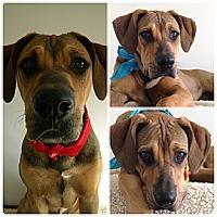 Adopt A Pet :: Memphis - Monteregie, QC