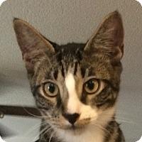 Adopt A Pet :: Jack - Winchester, CA