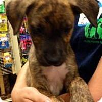 Adopt A Pet :: Road Runner - Gainesville, FL