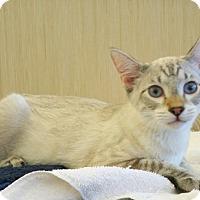 Adopt A Pet :: Akiro D - Sacramento, CA