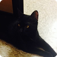 Adopt A Pet :: Zola - Monroe, GA