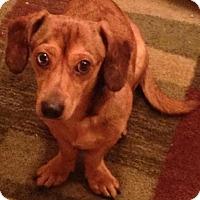 Adopt A Pet :: Tonka - Saskatoon, SK