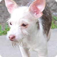 Adopt A Pet :: Jackson Browne - Norwalk, CT