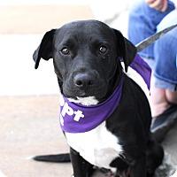Adopt A Pet :: Lois - Detroit, MI