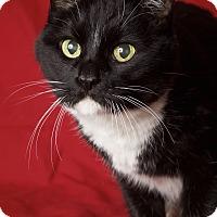 Adopt A Pet :: Krissy - Gilbert, AZ