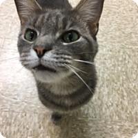 Adopt A Pet :: Nuka - Medina, OH