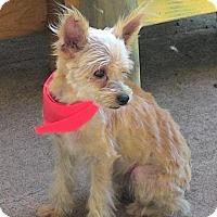 Adopt A Pet :: Peter Pan - Deltona, FL
