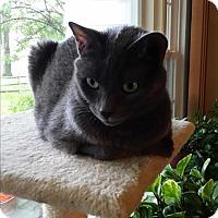 Adopt A Pet :: Zemi - Gaithersburg, MD