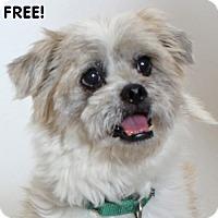 Adopt A Pet :: Sandy - Walnut Creek, CA