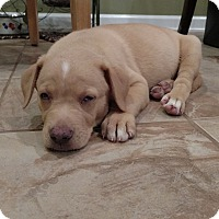 Adopt A Pet :: Ollie (courtesy listing) - Bartonsville, PA