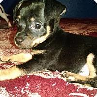 Adopt A Pet :: Lenny - Aurora, CO