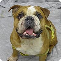 Adopt A Pet :: Stogie - Santa Ana, CA