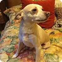 Adopt A Pet :: Louie-Adoption Pending - Warwick, NY
