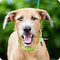 Adopt A Pet :: Teddy - Houston, TX