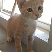 Adopt A Pet :: Morris - Bryson City, NC