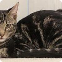 Adopt A Pet :: Tizzy - Columbus, OH