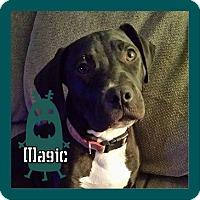 Adopt A Pet :: Magic - Des Moines, IA