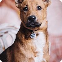 Adopt A Pet :: Ewa - Portland, OR