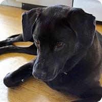 Adopt A Pet :: Nina - Sagaponack, NY