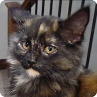 Adopt A Pet :: Penelope@rosehaven - Abbotsford, BC