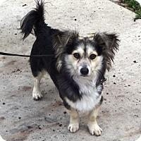 Adopt A Pet :: Bear - Lathrop, CA
